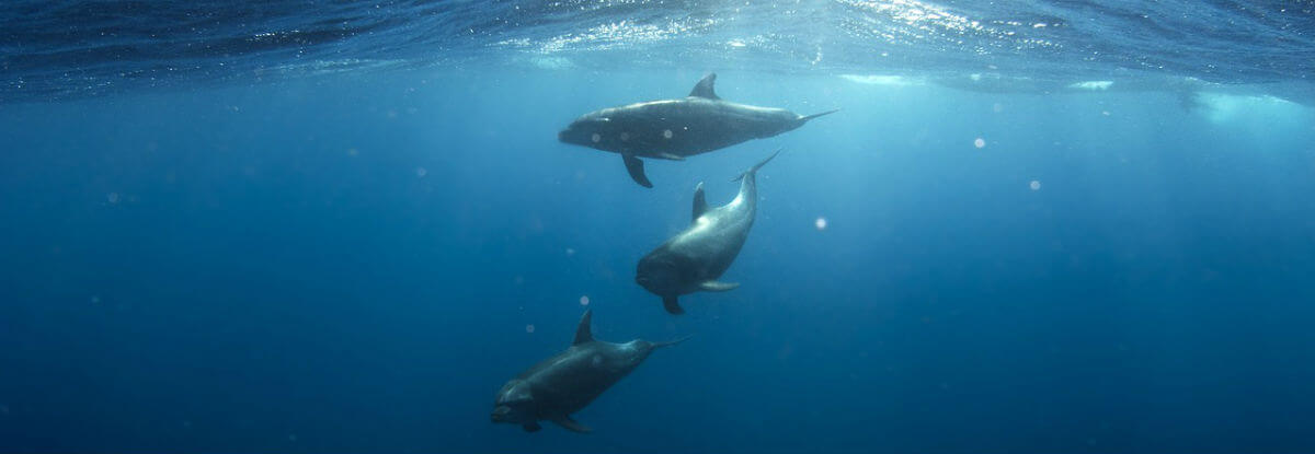 delfini nell'acqua, oceano