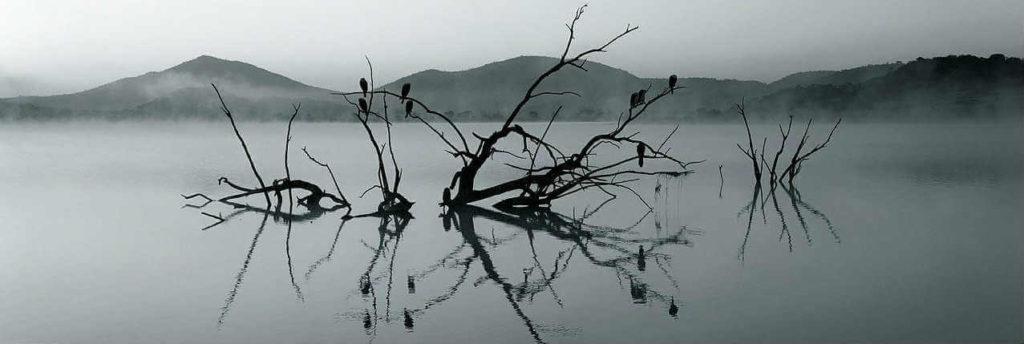 depressione; psicoterapia breve strategica depressione; psicologo depressione;